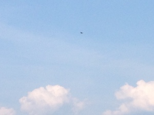 Do you see the eagle?
